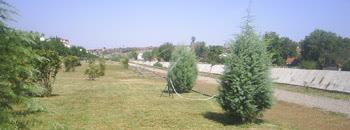 Зеленилото на кејот се полева од нов систем