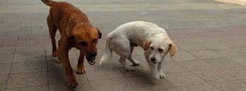 Во Куманово врие од кучиња скитници