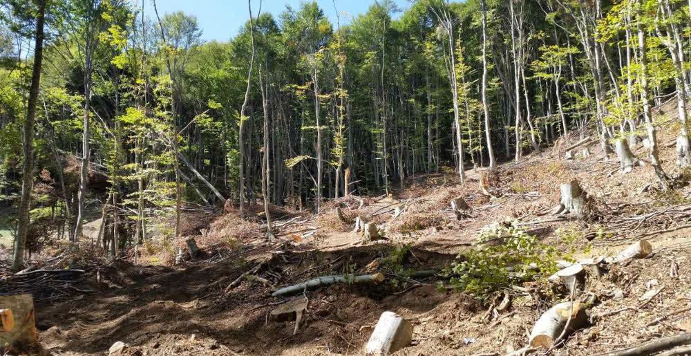 """Безмилосно се сечат шумите во Липковско, покажа истражувањето на """"Евротинк"""""""
