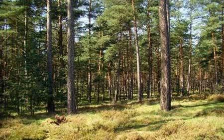 Делумна забрана за движење во шумите