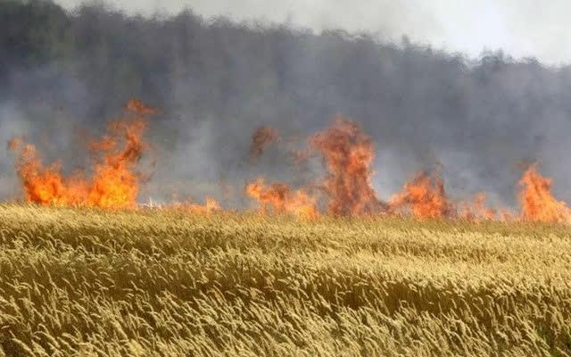 Во Клечовце изгореа 20 хектари јачмен