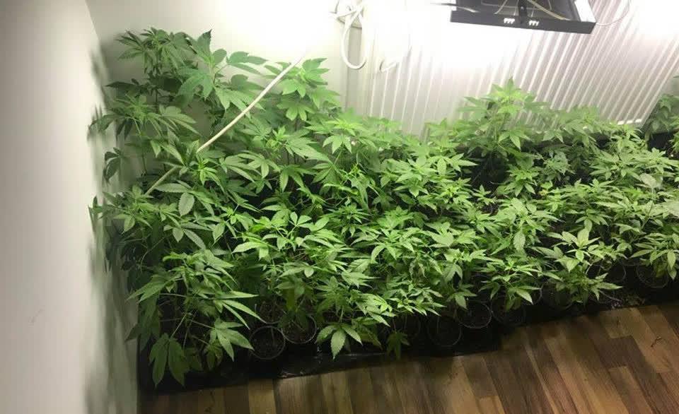 Откриена мини лабораторија за производство на марихуана - сопственикот уапсен