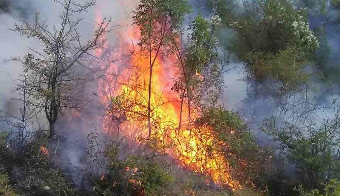 Се запали приколка од трактор, пожарот зафати и нива
