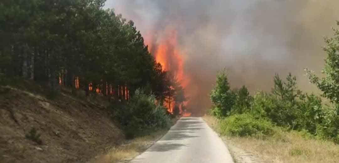 Ќе требаат и до 50 години за да се обноват шумите што изгореа